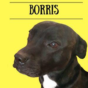 Borris