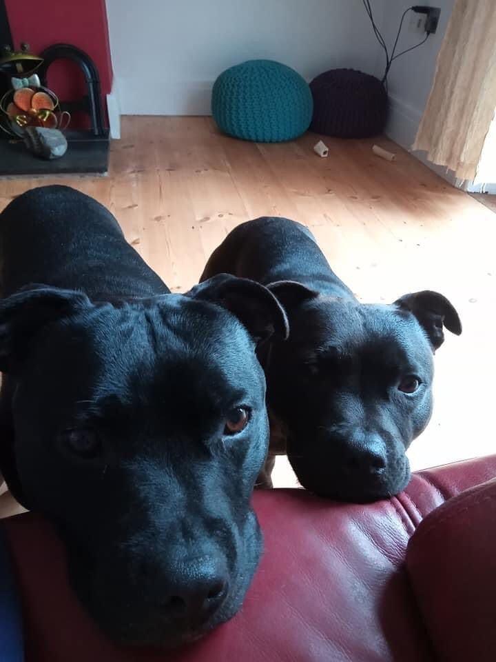 Izzee & Lulu the Staffie