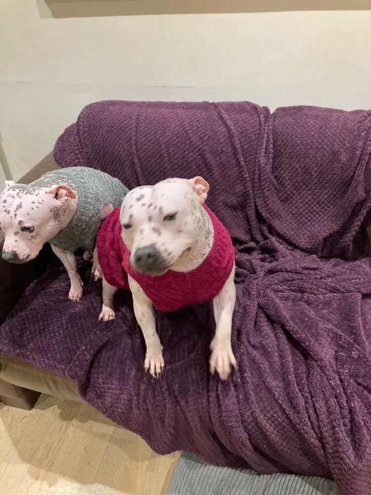 Poppy & Lola the Staffie