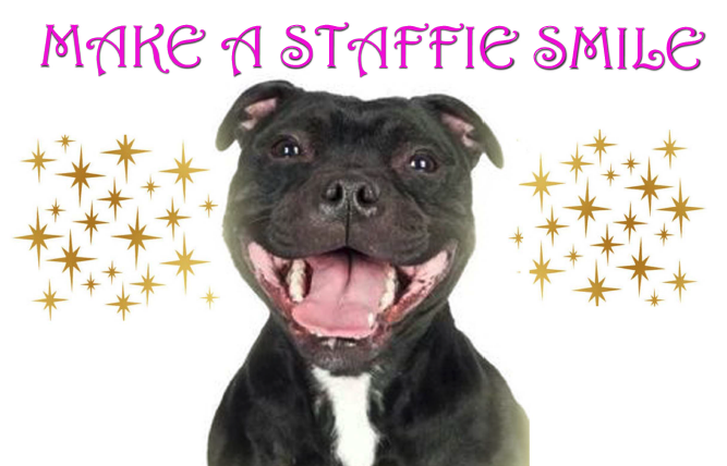Make a Staffie Smile